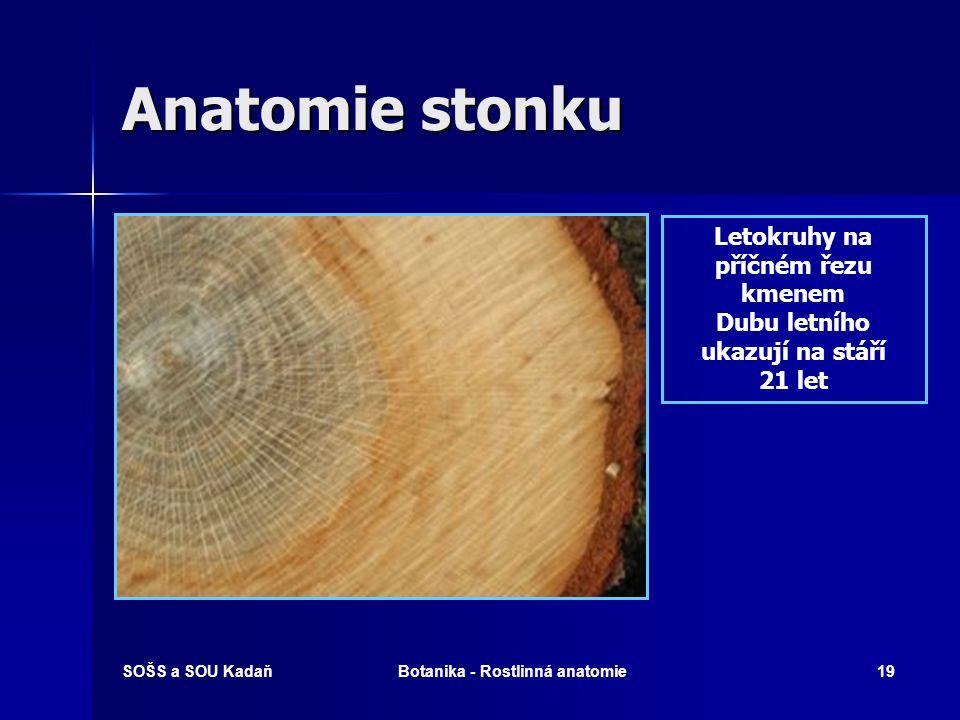 Anatomie stonku Letokruhy na příčném řezu kmenem
