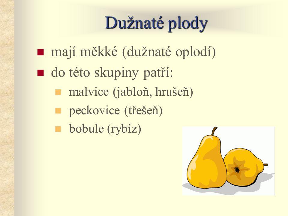 Dužnaté plody mají měkké (dužnaté oplodí) do této skupiny patří:
