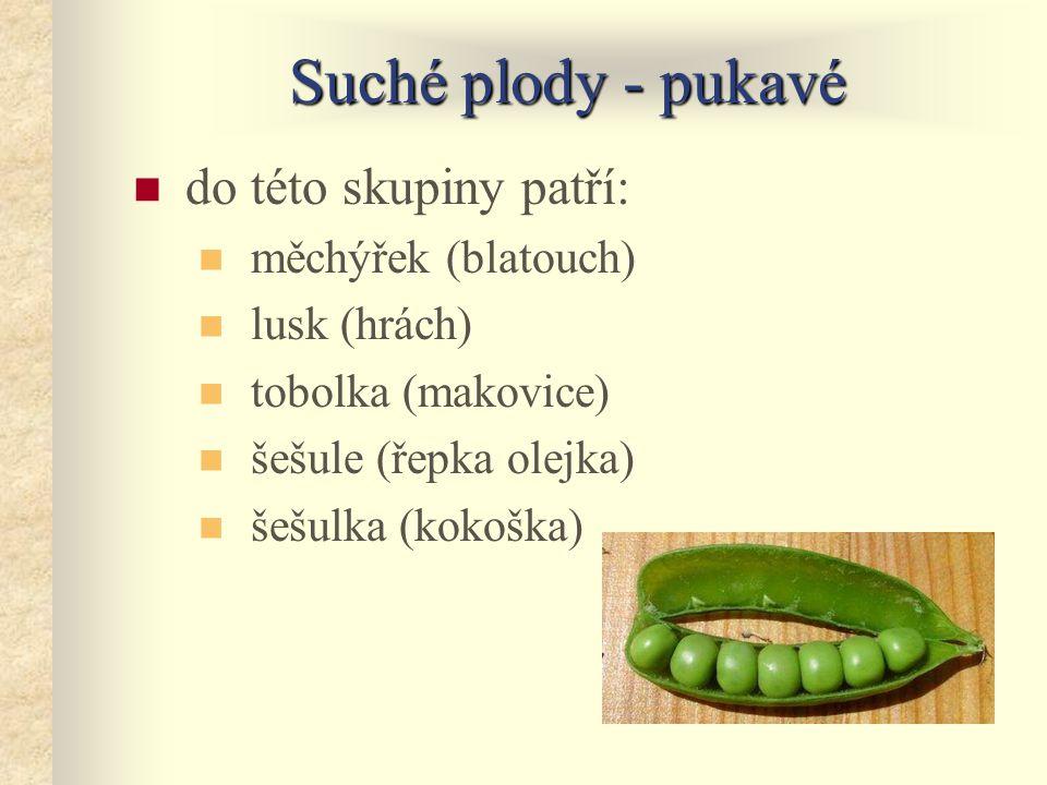 Suché plody - pukavé do této skupiny patří: měchýřek (blatouch)