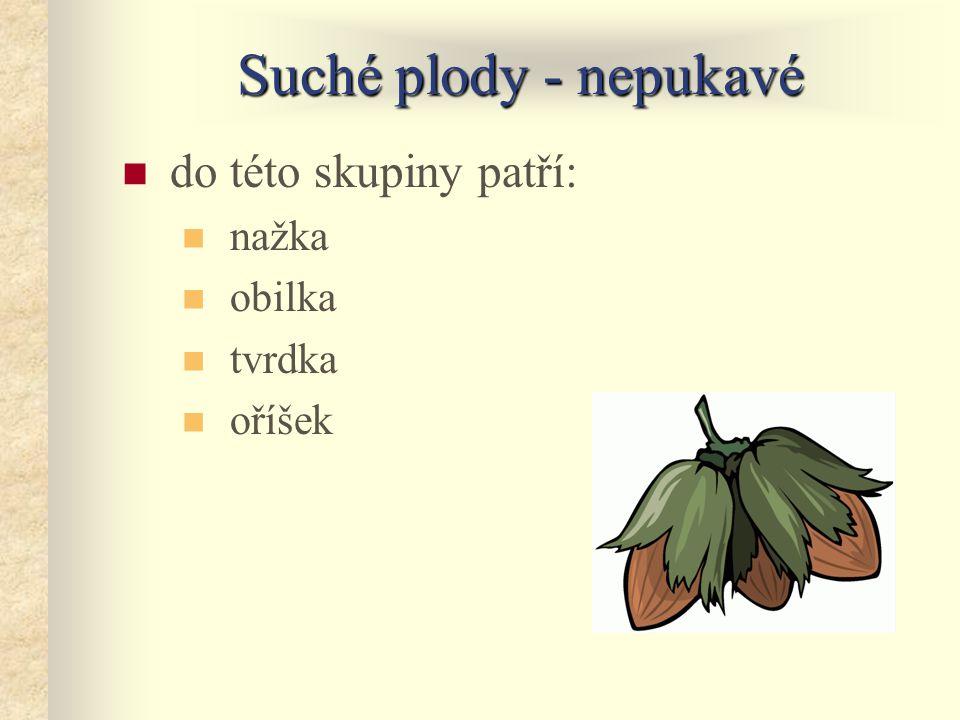 Suché plody - nepukavé do této skupiny patří: nažka obilka tvrdka