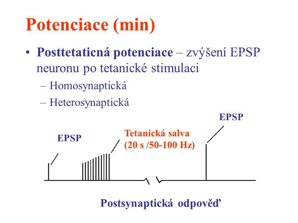 Potenciace (min) Posttetaticná potenciace – zvýšení EPSP neuronu po tetanické stimulaci. Homosynaptická.