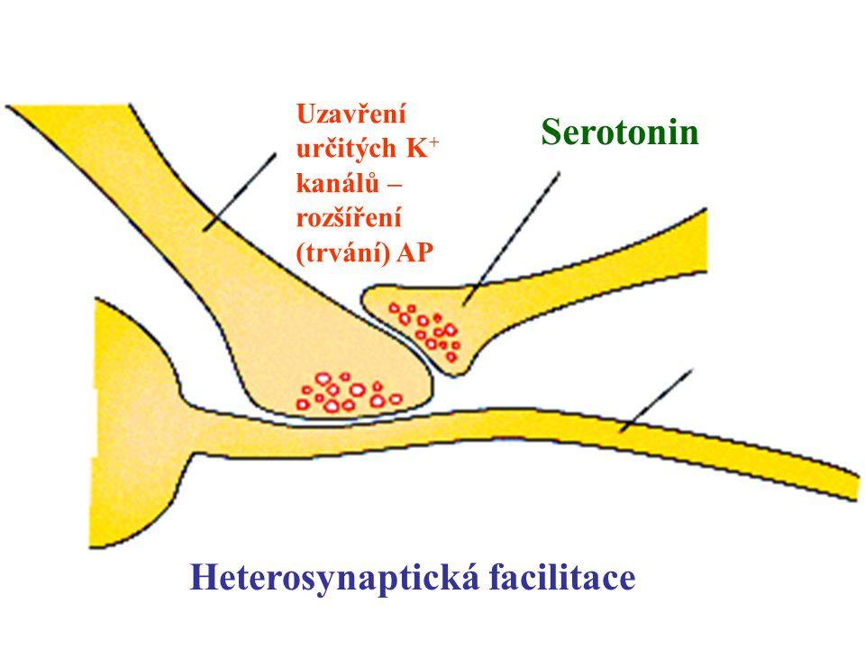 Heterosynaptická facilitace