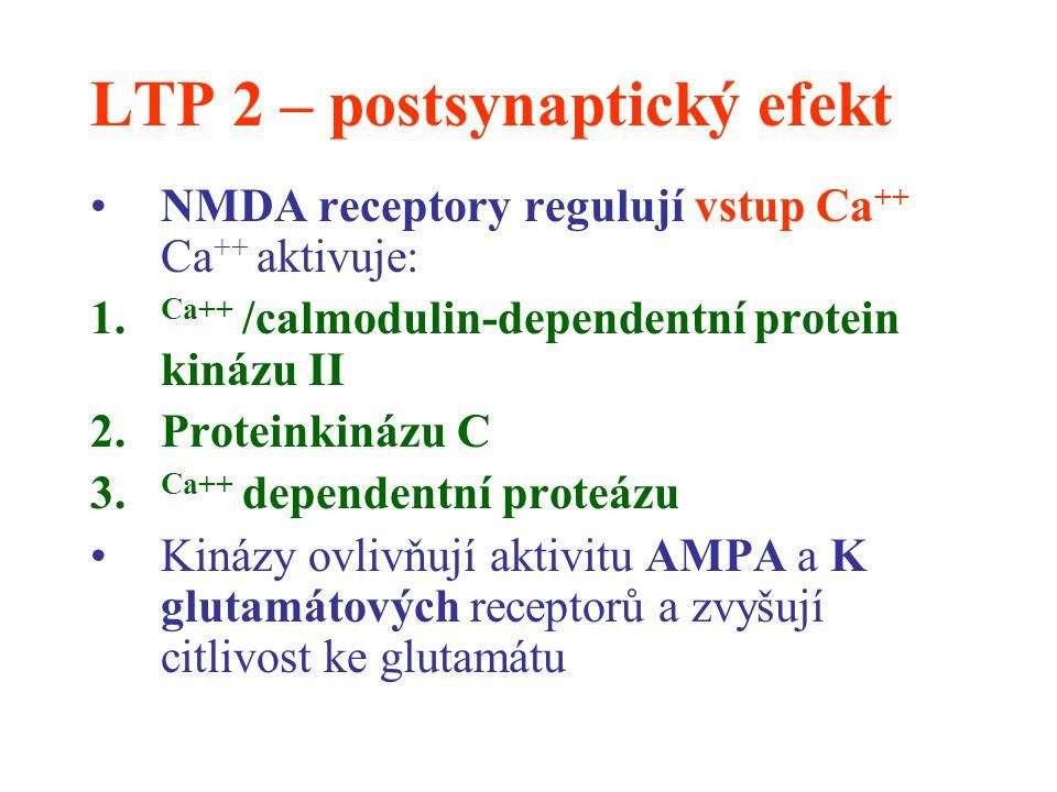 LTP 2 – postsynaptický efekt
