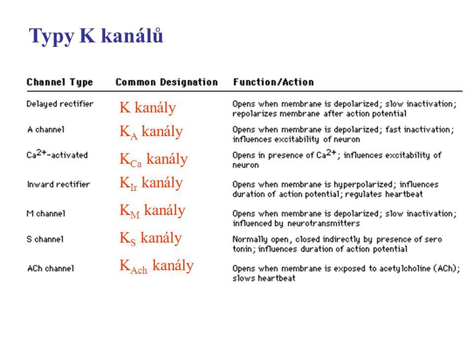 Typy K kanálů K kanály KA kanály KCa kanály KIr kanály KM kanály