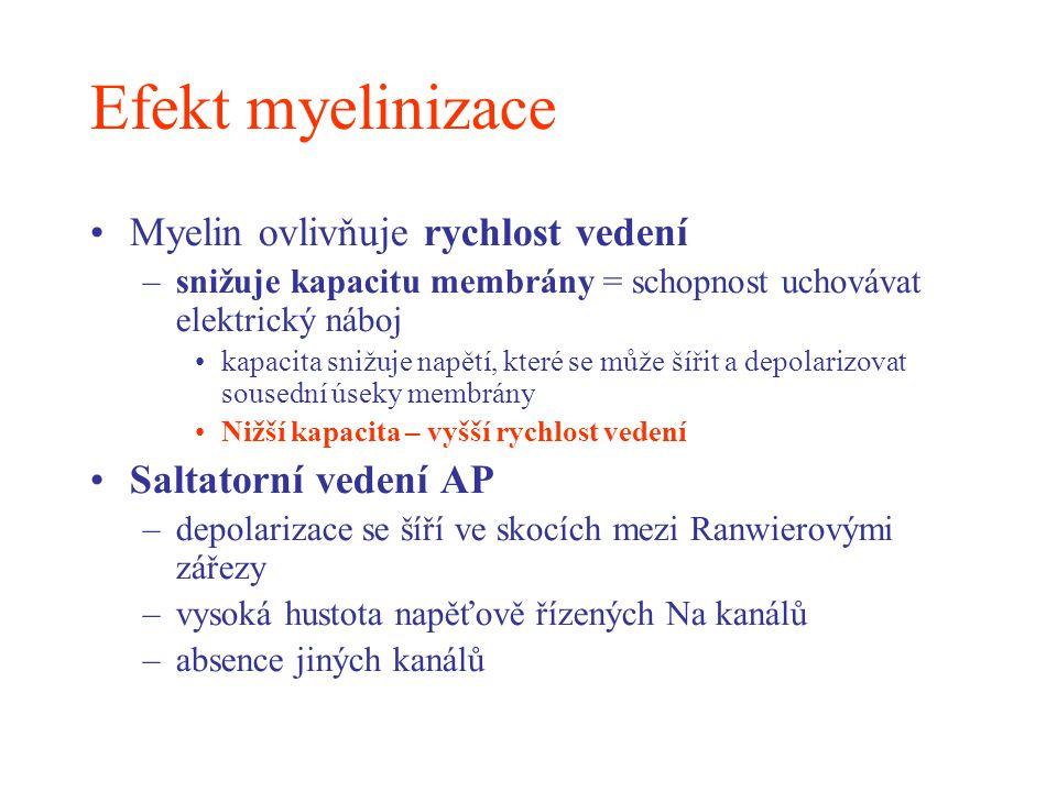 Efekt myelinizace Myelin ovlivňuje rychlost vedení