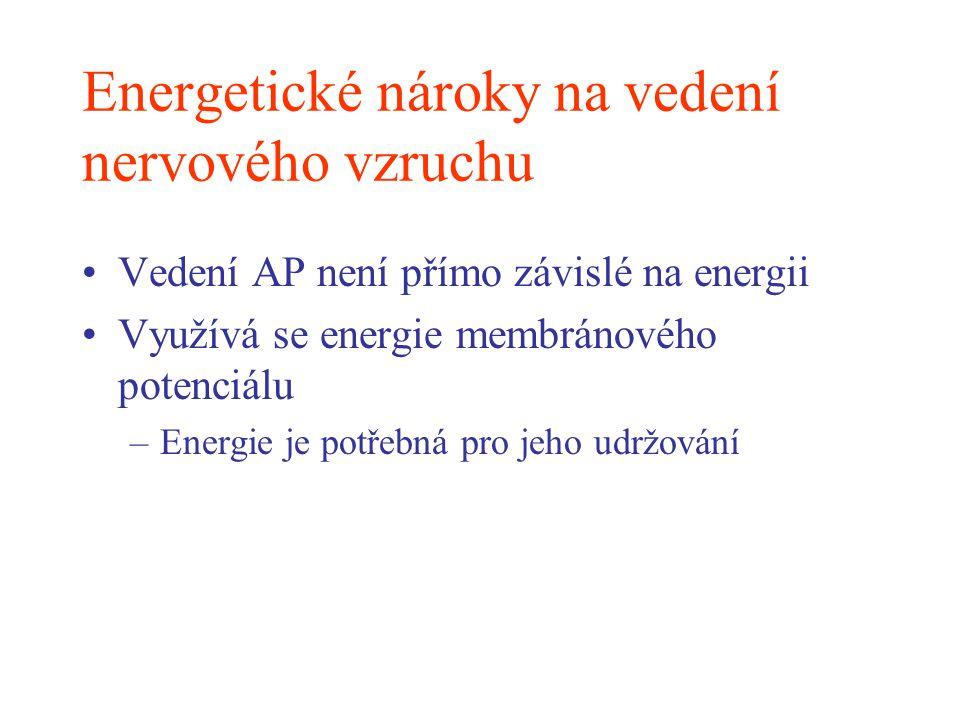 Energetické nároky na vedení nervového vzruchu