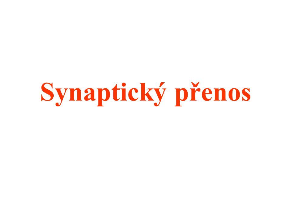 Synaptický přenos
