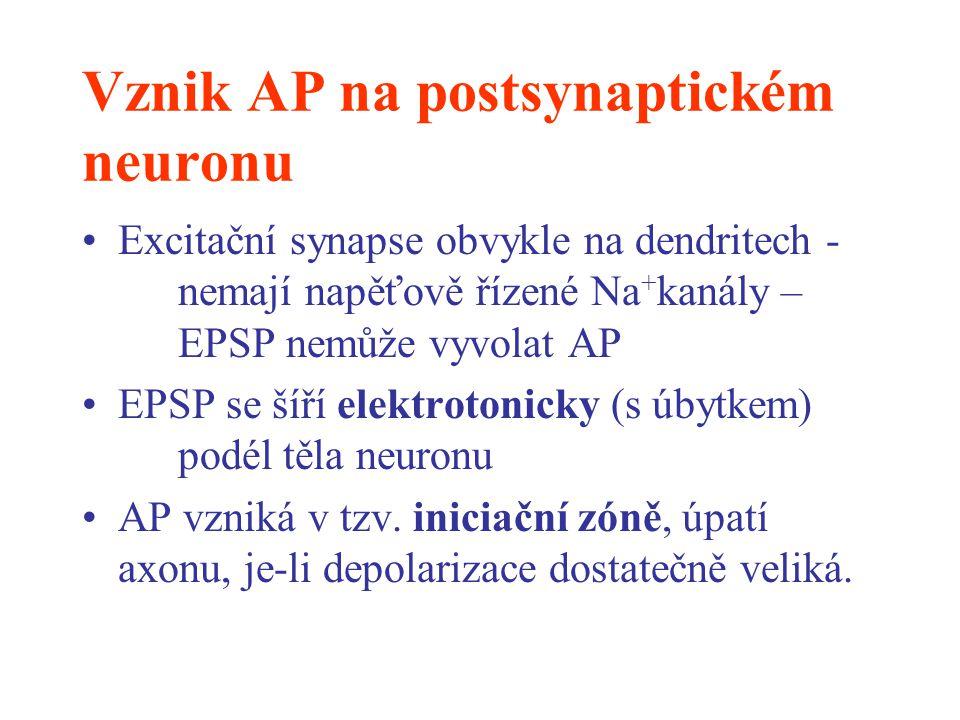 Vznik AP na postsynaptickém neuronu