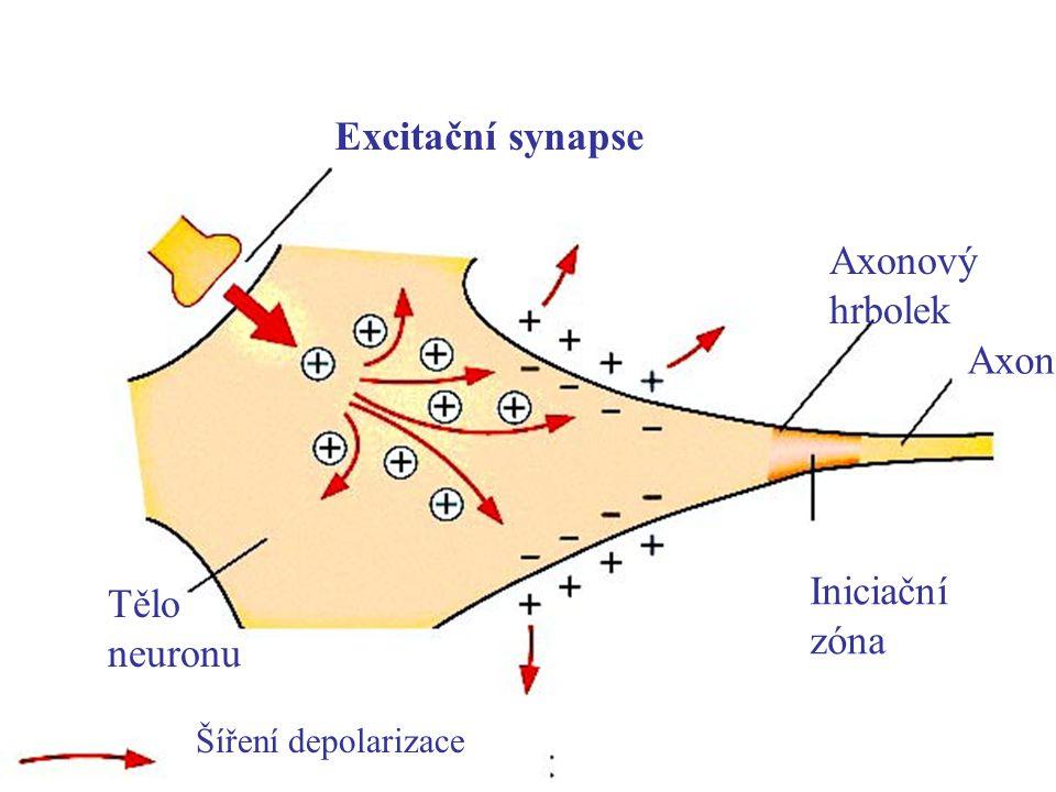 Excitační synapse Axonový hrbolek Axon Iniciační zóna Tělo neuronu