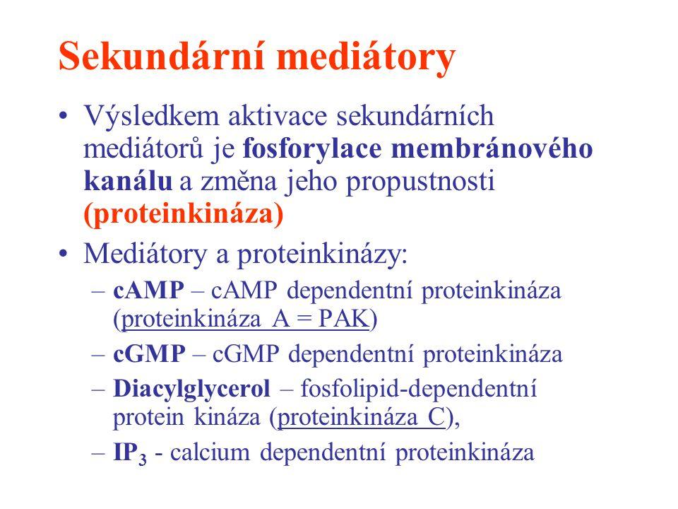 Sekundární mediátory Výsledkem aktivace sekundárních mediátorů je fosforylace membránového kanálu a změna jeho propustnosti (proteinkináza)