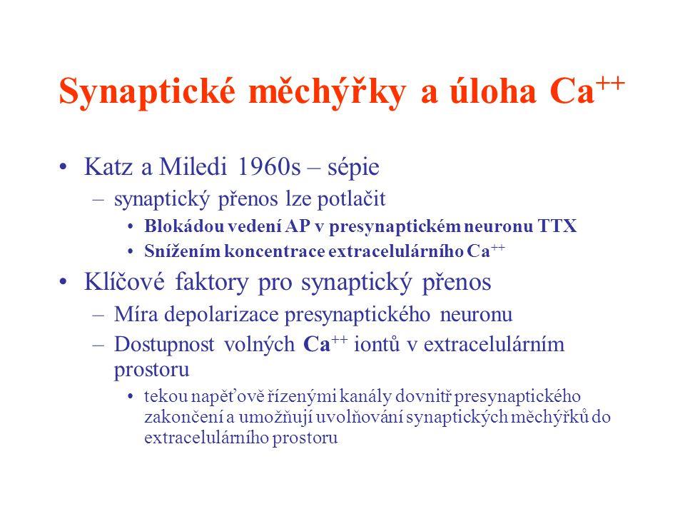 Synaptické měchýřky a úloha Ca++