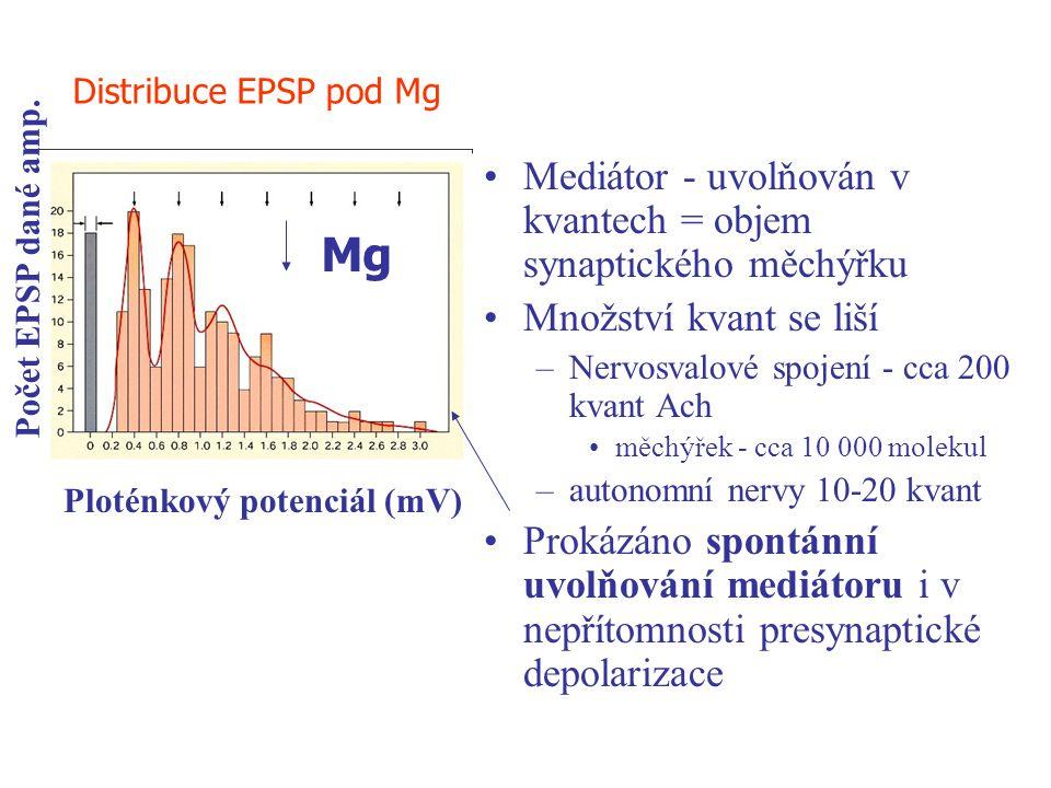 Mg Mediátor - uvolňován v kvantech = objem synaptického měchýřku