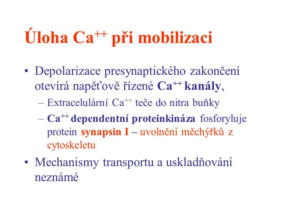 Úloha Ca++ při mobilizaci