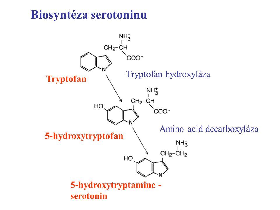 Biosyntéza serotoninu