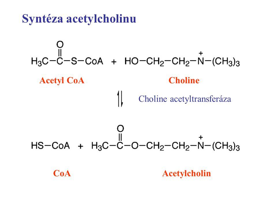 Syntéza acetylcholinu