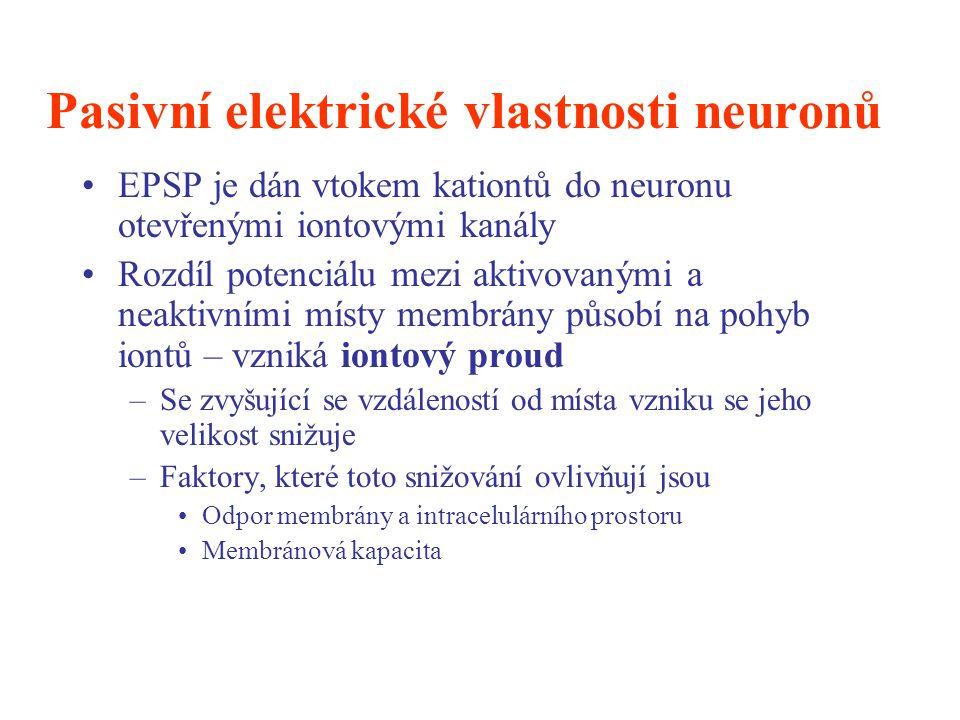 Pasivní elektrické vlastnosti neuronů