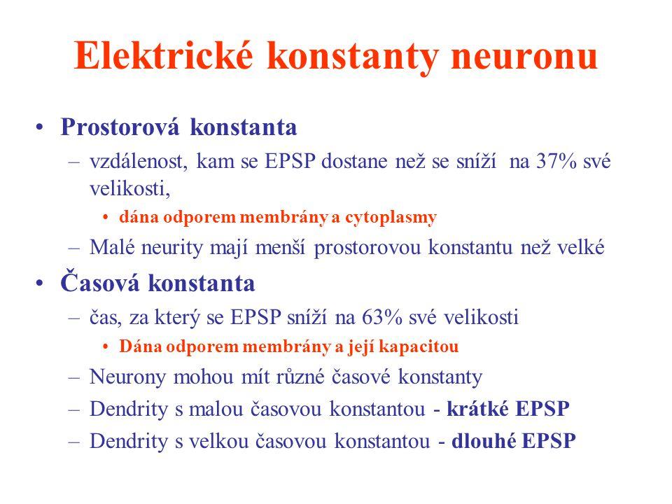 Elektrické konstanty neuronu