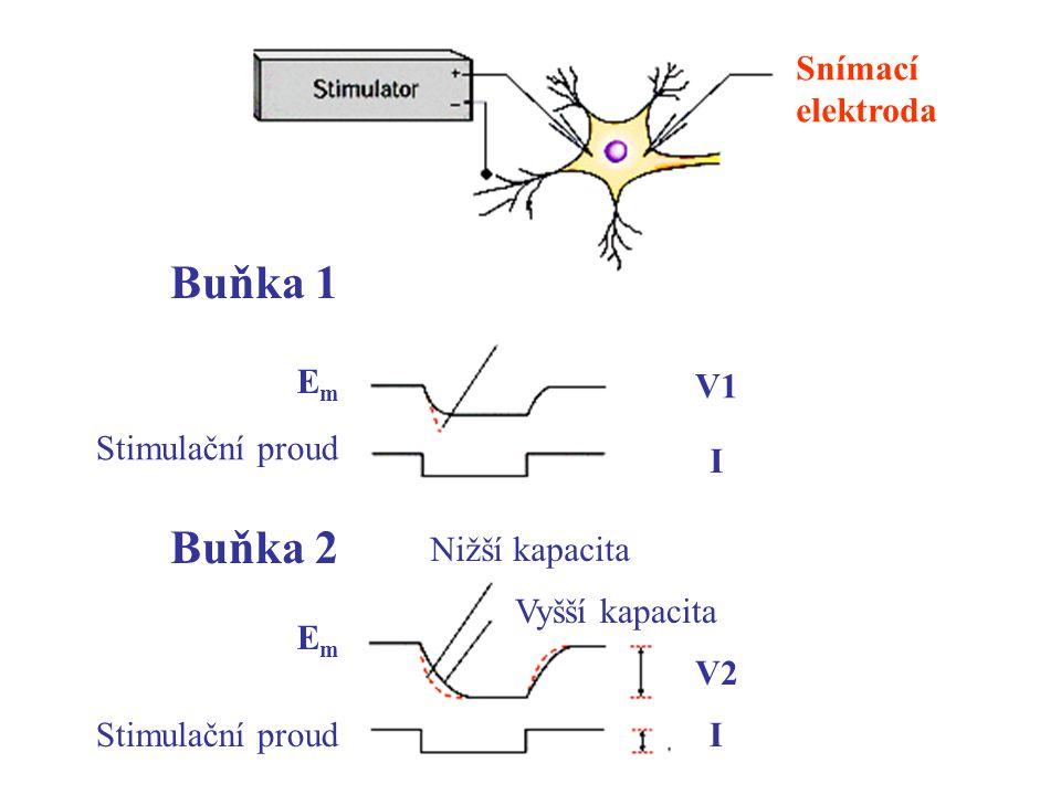 Buňka 1 Buňka 2 Snímací elektroda Em V1 Stimulační proud I