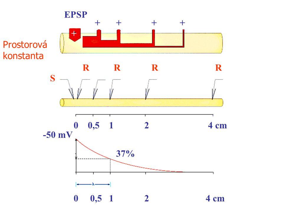 EPSP + + + + + Prostorová konstanta R R R R S 0,5 1 2 4 cm -50 mV 37% 0,5 1 2 4 cm