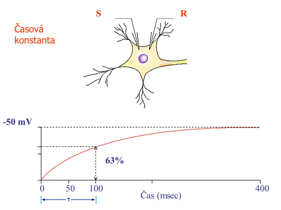 S R Časová konstanta -50 mV 63% 50 100 400 Čas (msec)