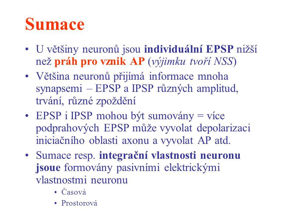 Sumace U většiny neuronů jsou individuální EPSP nižší než práh pro vznik AP (výjimku tvoří NSS)