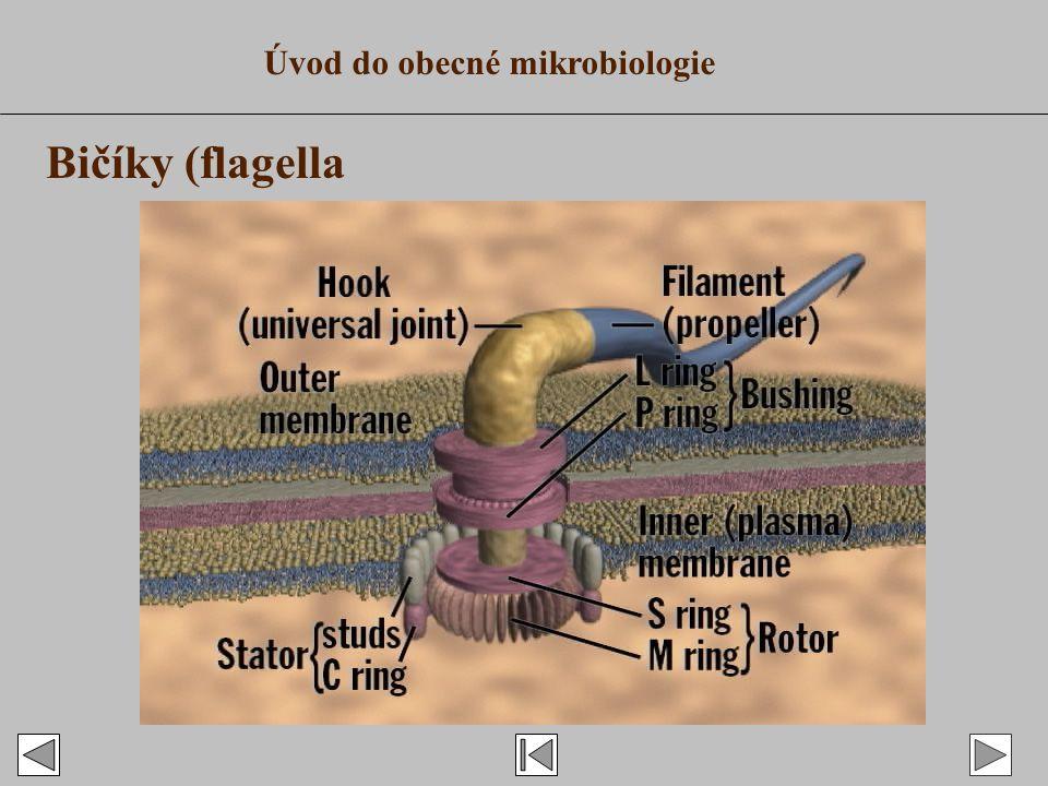 Úvod do obecné mikrobiologie