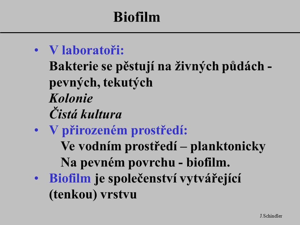 Biofilm V laboratoři: Bakterie se pěstují na živných půdách - pevných, tekutých Kolonie Čistá kultura.
