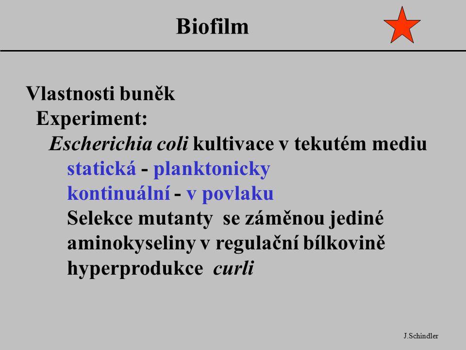 Biofilm Vlastnosti buněk