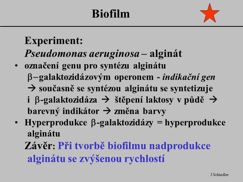 Biofilm Experiment: Pseudomonas aeruginosa – alginát