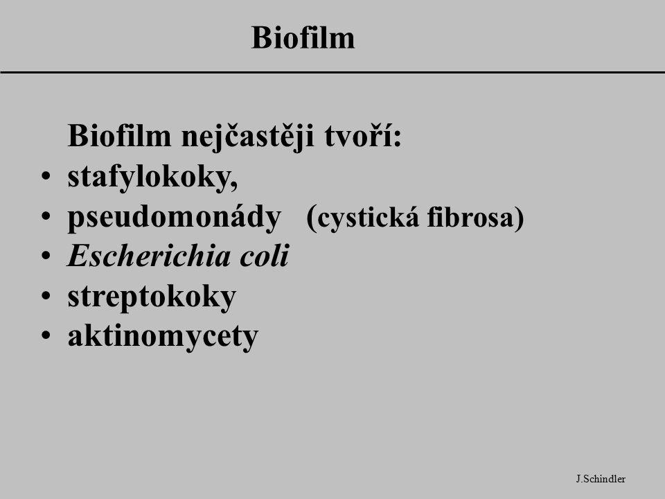 Biofilm nejčastěji tvoří: stafylokoky, pseudomonády (cystická fibrosa)