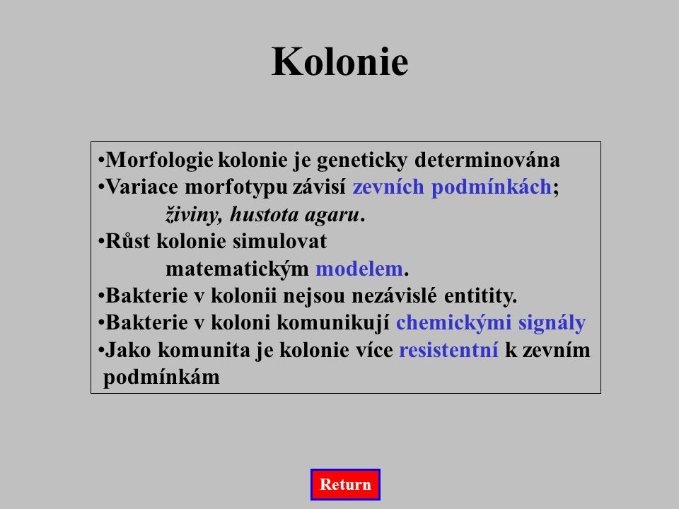 Kolonie Morfologie kolonie je geneticky determinována
