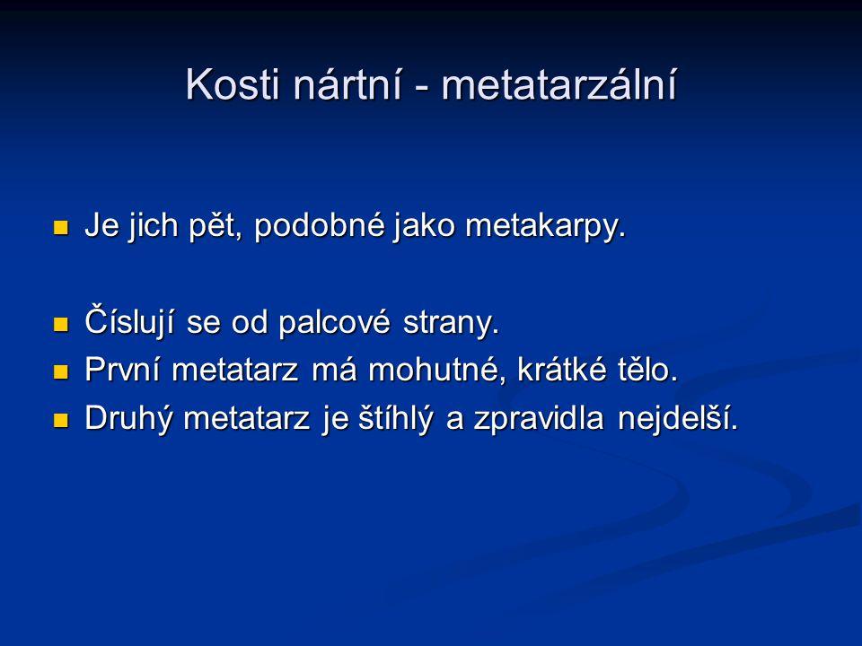 Kosti nártní - metatarzální
