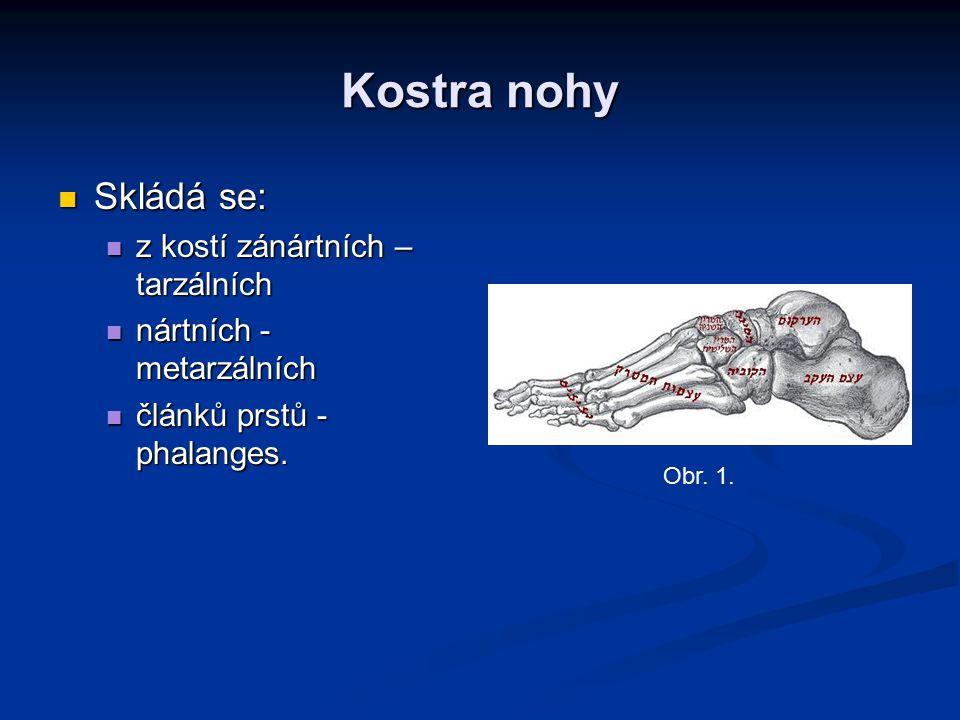 Kostra nohy Skládá se: z kostí zánártních – tarzálních