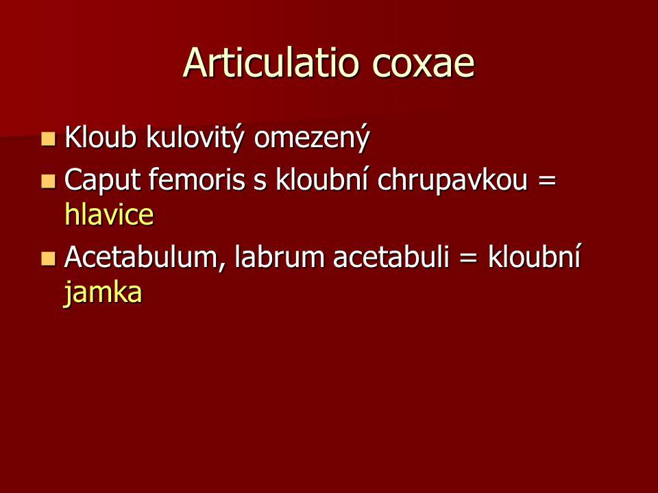 Articulatio coxae Kloub kulovitý omezený