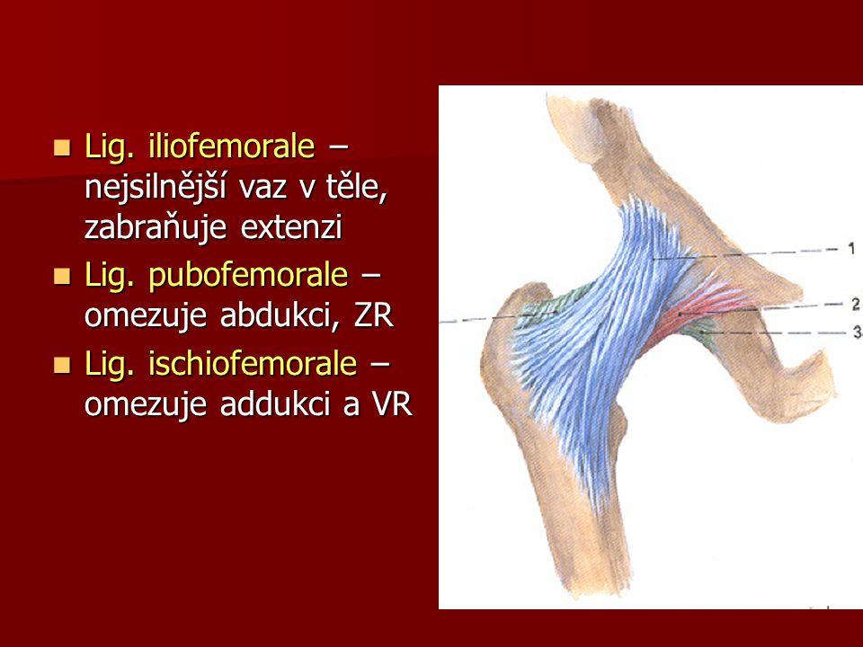 Lig. iliofemorale – nejsilnější vaz v těle, zabraňuje extenzi