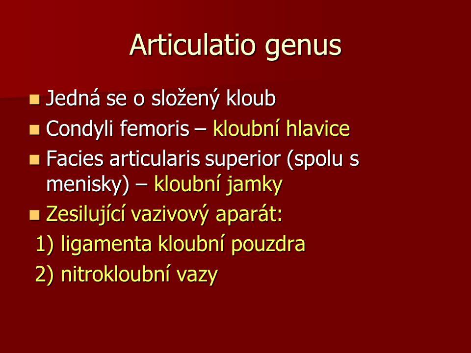 Articulatio genus Jedná se o složený kloub