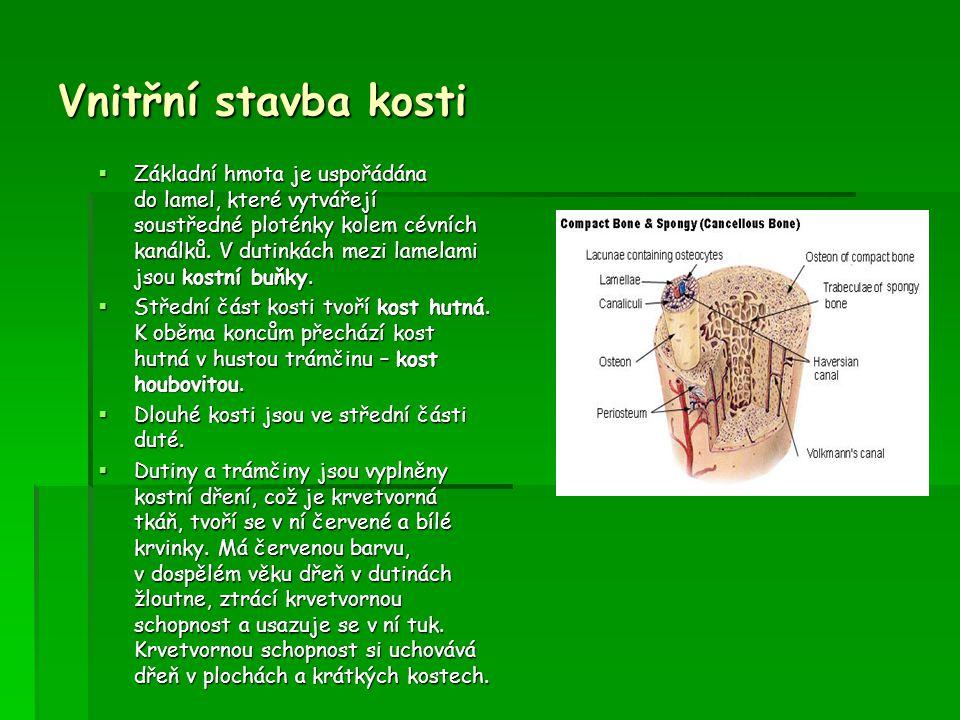 Vnitřní stavba kosti