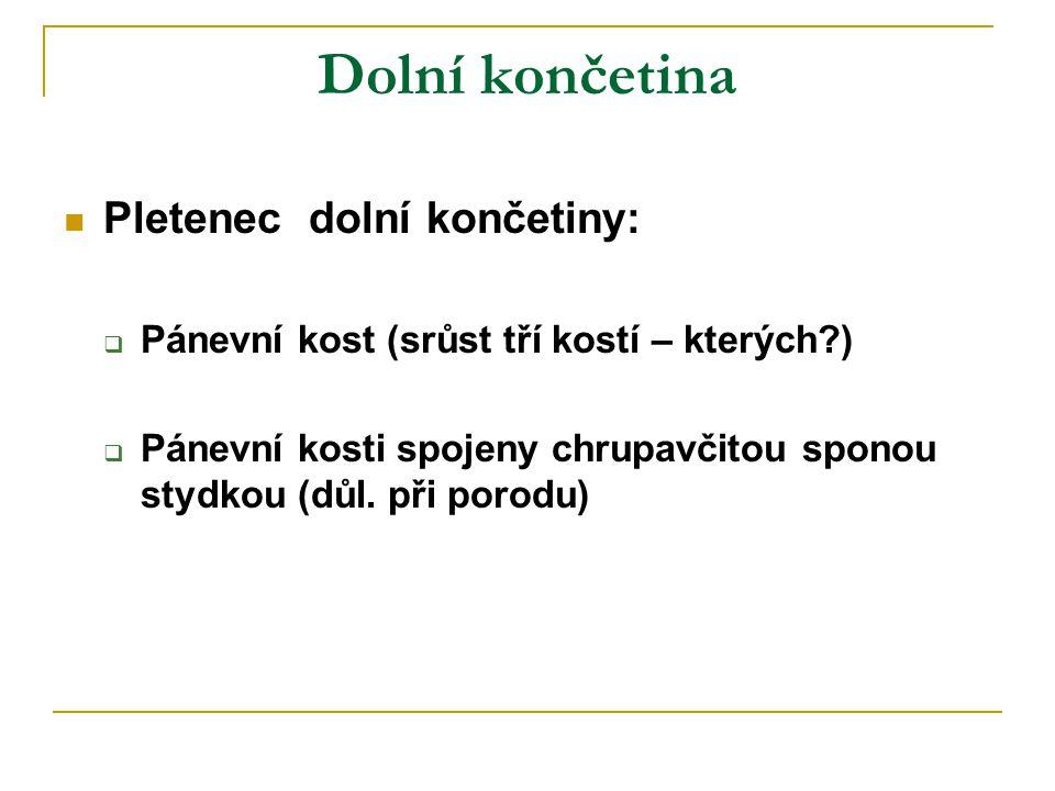 Dolní končetina Pletenec dolní končetiny: