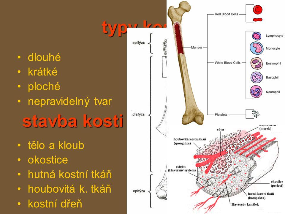 typy kostí stavba kosti dlouhé krátké ploché nepravidelný tvar