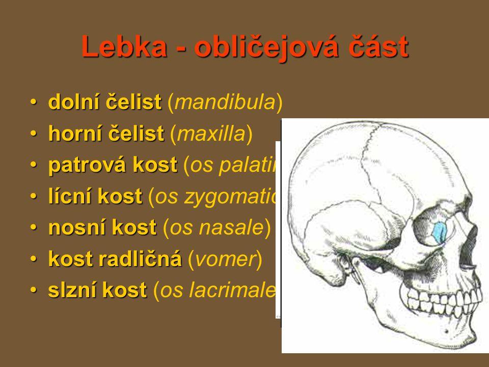 Lebka - obličejová část
