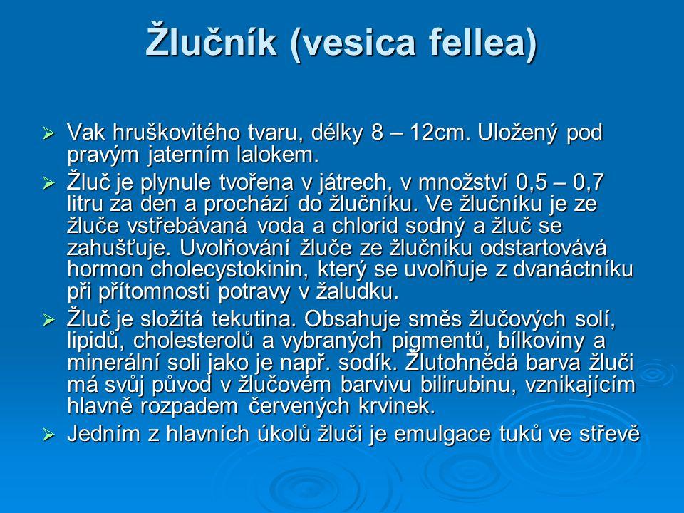Žlučník (vesica fellea)