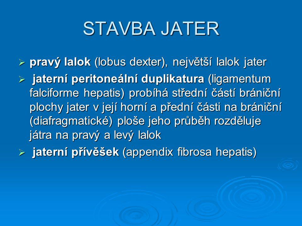STAVBA JATER pravý lalok (lobus dexter), největší lalok jater