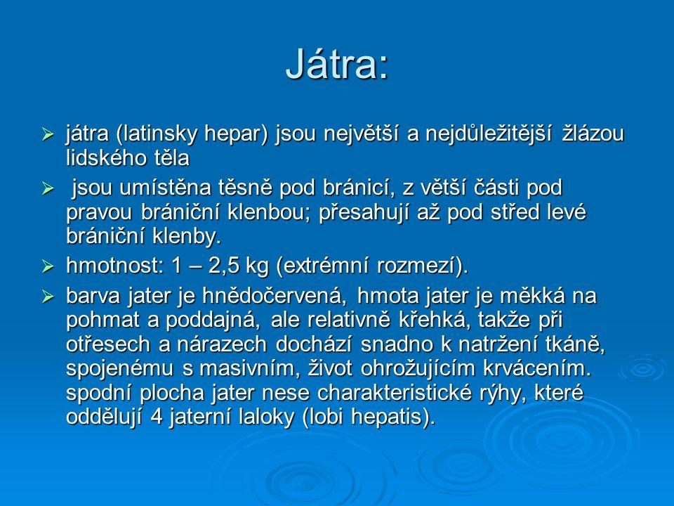 Játra: játra (latinsky hepar) jsou největší a nejdůležitější žlázou lidského těla.