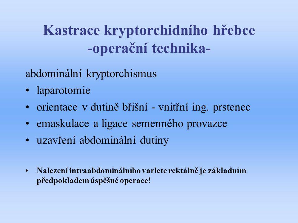 Kastrace kryptorchidního hřebce -operační technika-