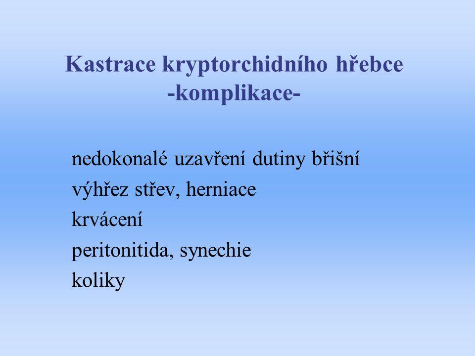 Kastrace kryptorchidního hřebce -komplikace-
