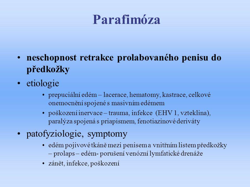 Parafimóza neschopnost retrakce prolabovaného penisu do předkožky