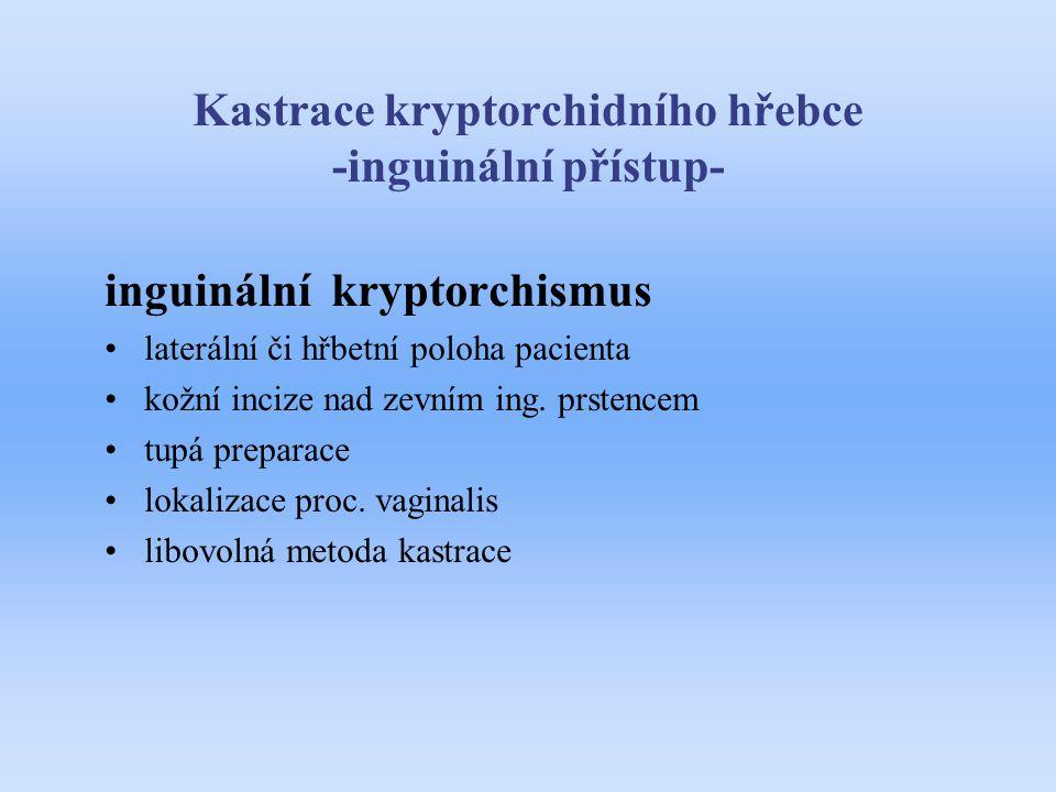 Kastrace kryptorchidního hřebce -inguinální přístup-