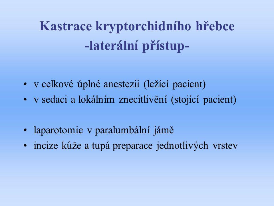 Kastrace kryptorchidního hřebce -laterální přístup-