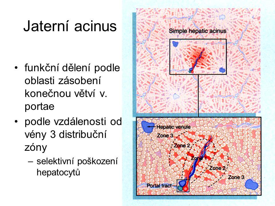 Jaterní acinus funkční dělení podle oblasti zásobení konečnou větví v. portae. podle vzdálenosti od vény 3 distribuční zóny.