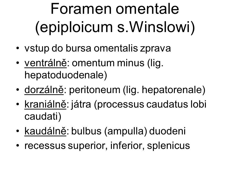 Foramen omentale (epiploicum s.Winslowi)